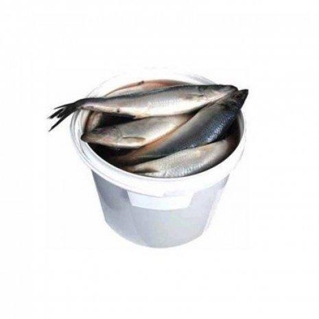 Emmer haring diepvries 1 kg